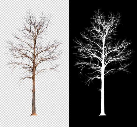 arbre unique sans feuille avec chemin de détourage et canal alpha