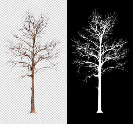 single tree without leaf with clipping path and alpha channel Standard-Bild - 122182187