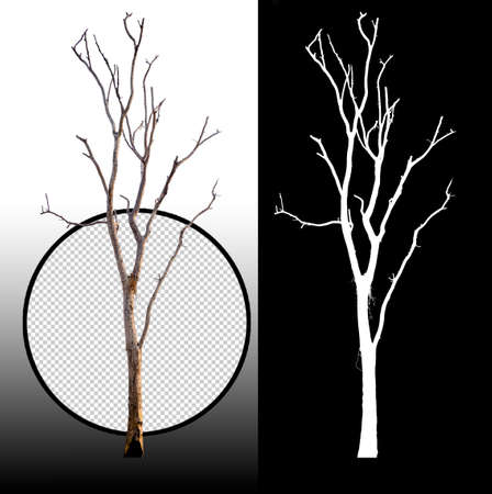 single tree without leaf with clipping path and alpha channel Reklamní fotografie