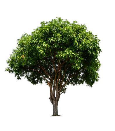 pojedyncze drzewo ze ścieżką przycinającą Zdjęcie Seryjne
