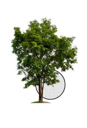 single tree with clipping path