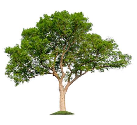 single tree with clipping path Reklamní fotografie