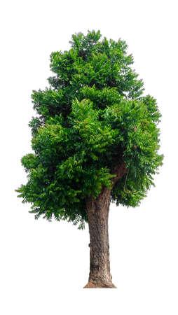 enkele boom met uitknippad