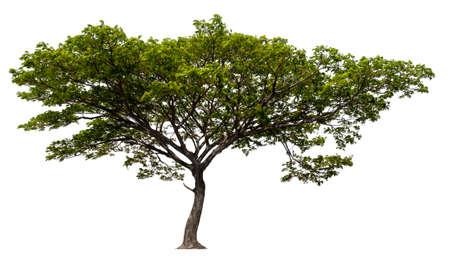 pojedyncze pojedyncze drzewo na białym tle