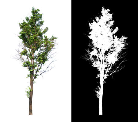 single tree with alpha channel