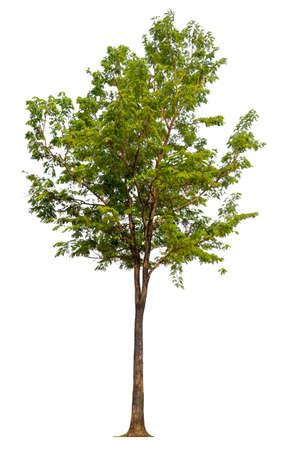 isolated tree on white background Stockfoto