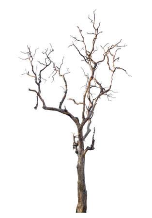 arbre mort isolé sur fond blanc avec chemin de détourage