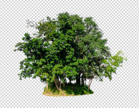 isolated tree on transperrent picture background with alpha channel Stockfoto - 134773313