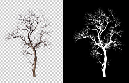isolated death tree on transperrent picture background with clipping path and alpha channel Stockfoto