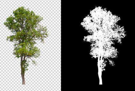 isolated tree on transperret picture background with clipping path and alpha channel