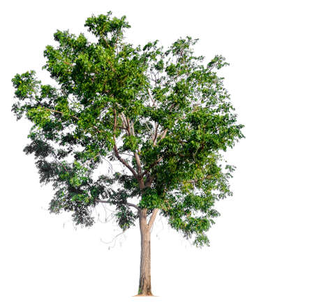 isolated tree on white background with clipping path Stockfoto - 134773386