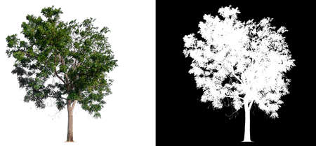isolated tree on white background with clipping path and alpha channel Stockfoto