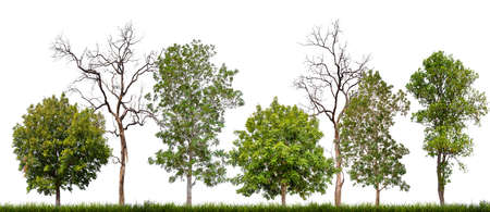 isolated tree and death on white background