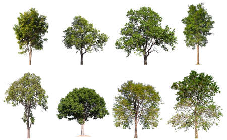 collection tree isolated on white background Stockfoto - 135216504