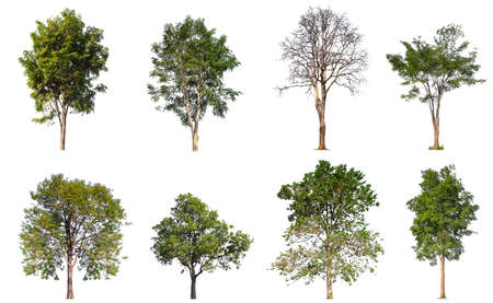 collection tree isolated on white background  Stockfoto