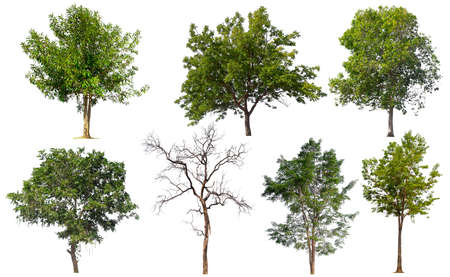 collection tree isolated on white background Stockfoto - 135216660