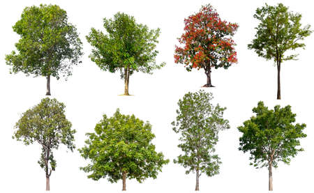 collection tree isolated on white background Stockfoto - 135216665