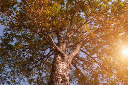 under tree view picture and show tree branch with sunlight Stockfoto - 135216657