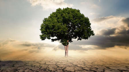 Einzelner großer Baum mit Knisterboden und Strahllicht, Luftverschmutzungskonzept