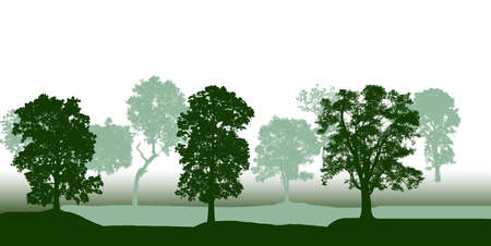 illustration trees forest on white background