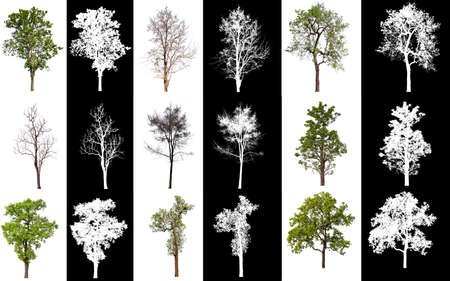 collection tree on white background with alpha channel  版權商用圖片