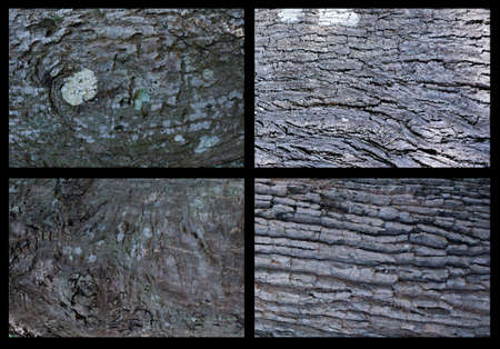 collection bark texture for 3D tree texture 版權商用圖片