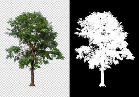 isolated tree on white background with clipping path and alpha channel 版權商用圖片