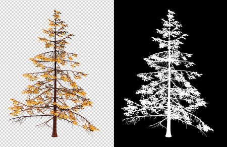 isolated tree on white background picture with clippings path and alpha channel for brush Reklamní fotografie