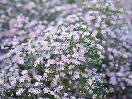 violet blooming flower pattern background