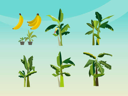 exotic plant: set of banana tree - icon vector illustration