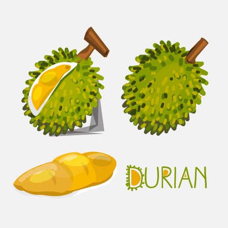 king thailand: durian- vector illustration