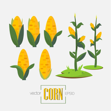 grain fields: corns and corn tree - vector illustration