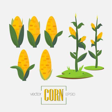 champ de mais: cors et l'arbre de maïs - illustration vectorielle