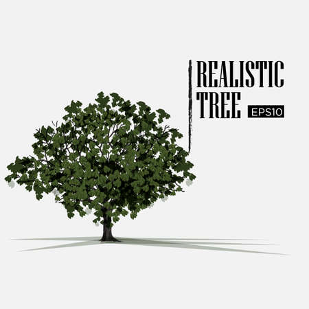 isolated tree: realistic tree - vector illustration Illustration