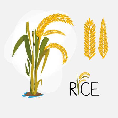 crecimiento planta: establece arroz. letra - ilustración vectorial