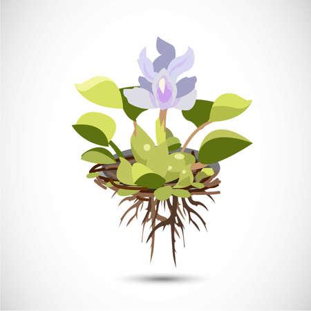 Water Hyacinth - vector illustration