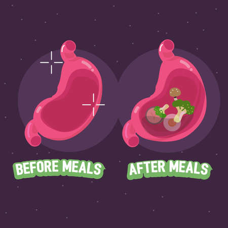 alimentary: before and after meal of stomach. how to take pills concept - vector illustration Illustration