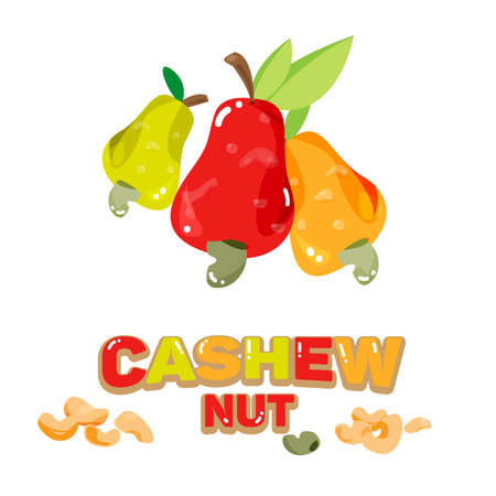 thailand food: Cashew nuts fruit abnd seed with typographic design - vector illustration