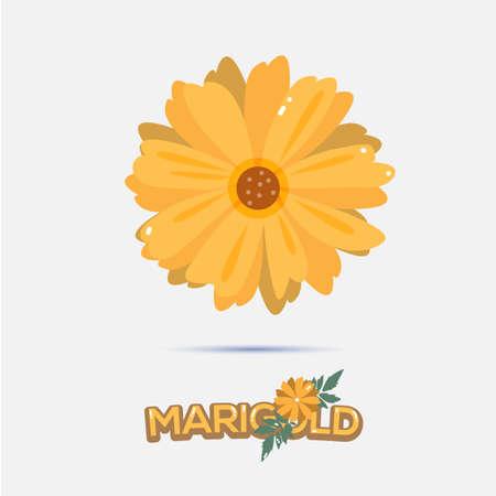 garden marigold: marigold flower - vector illustration