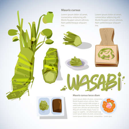wasabi root or plant set. grated fresh wasabi by shark skin grater. infographic. sashimi. typographic for header design - vector illustration