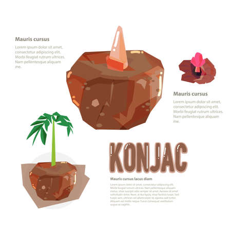 starch: Elephant Yam, Stanley S Water Tub or Konjac Plant. infographic - vector illustration Illustration