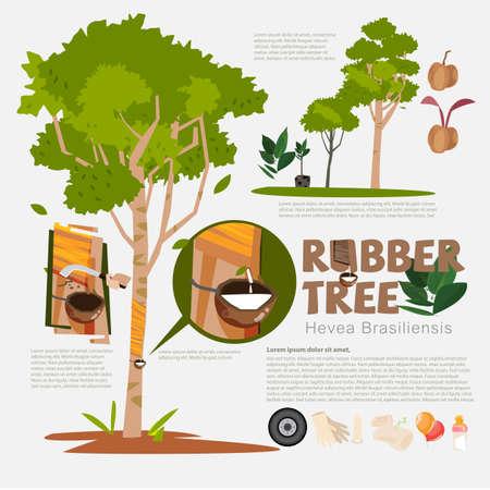 Árbol de goma o brasiliensis de Hevea con los elementos infographic del detalle. Leche del árbol de goma. beneficio. prodcut de caucho.