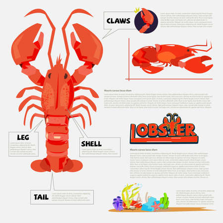 Lobster - vector illustration.