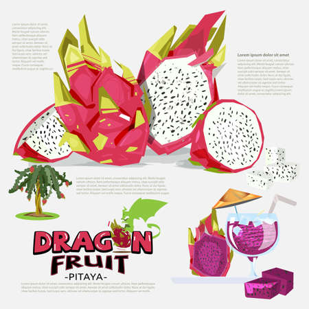 Dragon fruit information graphic. tree. juice. logotype. Pitaya - vector illustration