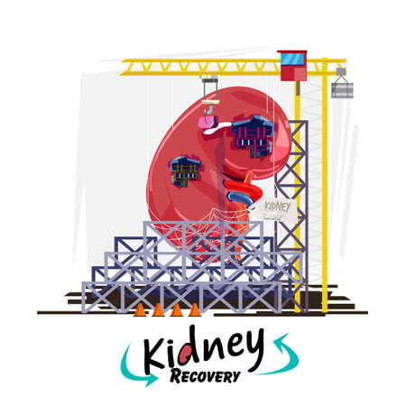 Kidney recovery concept. Human kidney with hanging with building crane to repair or recovery. logo - vector illustration