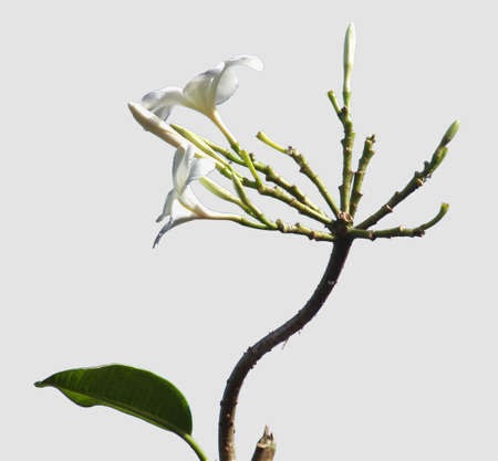 lonely flower grown up  Standard-Bild