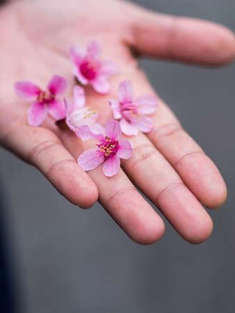 sakura on my hand