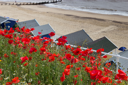 southwold: Southwold, Poppies and Beach Huts