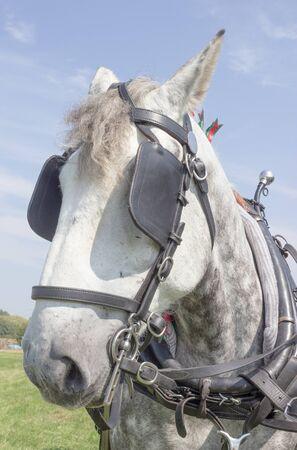 blinkers: Heavy Horse