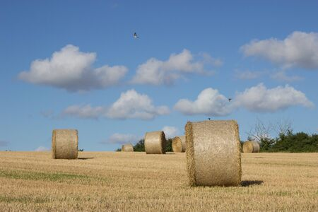 bales: Bales of Straw